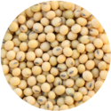 FOOD GRADE SOYBEANS
